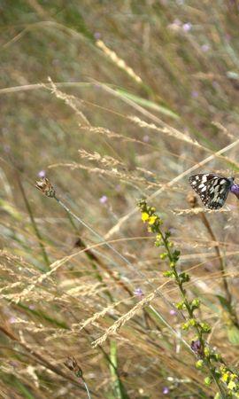 29574 Salvapantallas y fondos de pantalla Insectos en tu teléfono. Descarga imágenes de Mariposas, Hierba, Insectos gratis