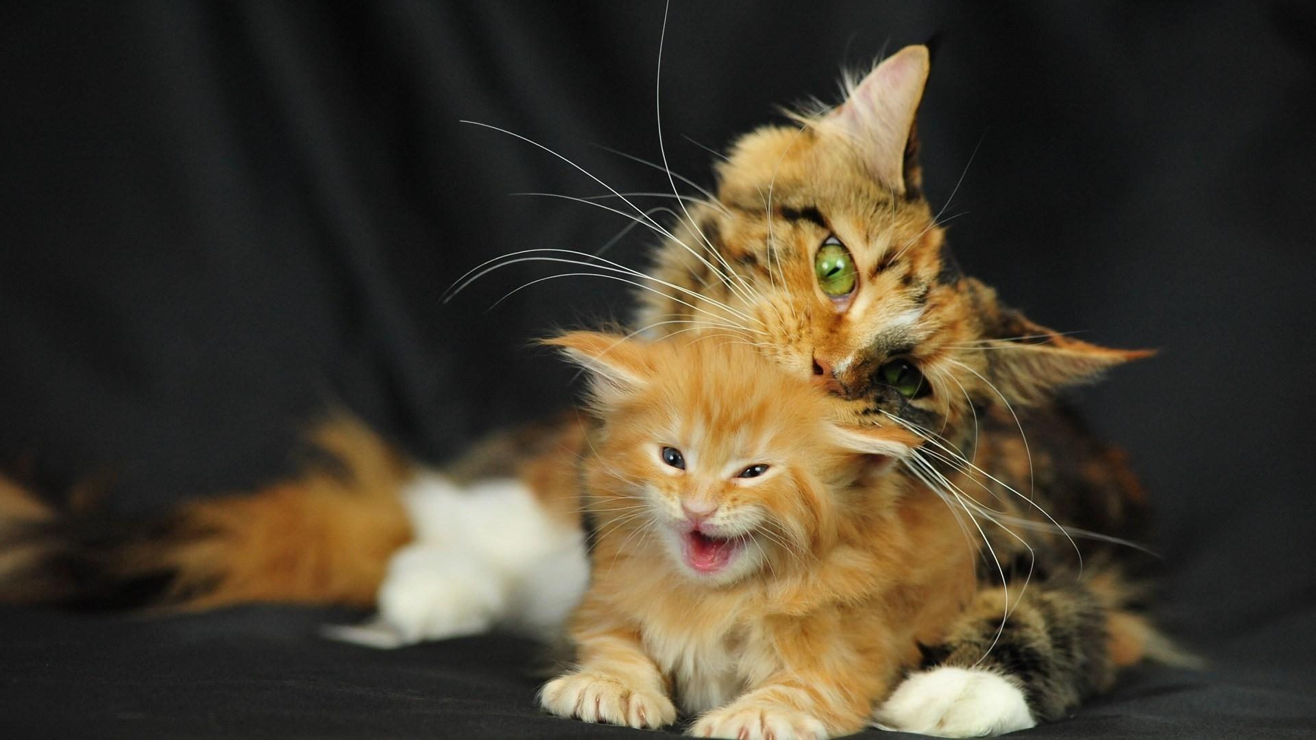 24482 скачать обои Животные, Кошки (Коты, Котики) - заставки и картинки бесплатно
