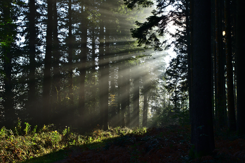 Descargar imágenes Bosque HD gratis