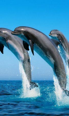 15135 baixar papel de parede Animais, Água, Golfinhos, Mar - protetores de tela e imagens gratuitamente
