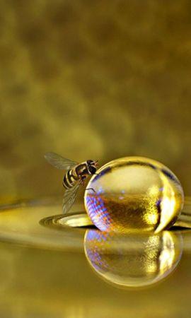 40535 télécharger le fond d'écran Insectes, Abeilles - économiseurs d'écran et images gratuitement