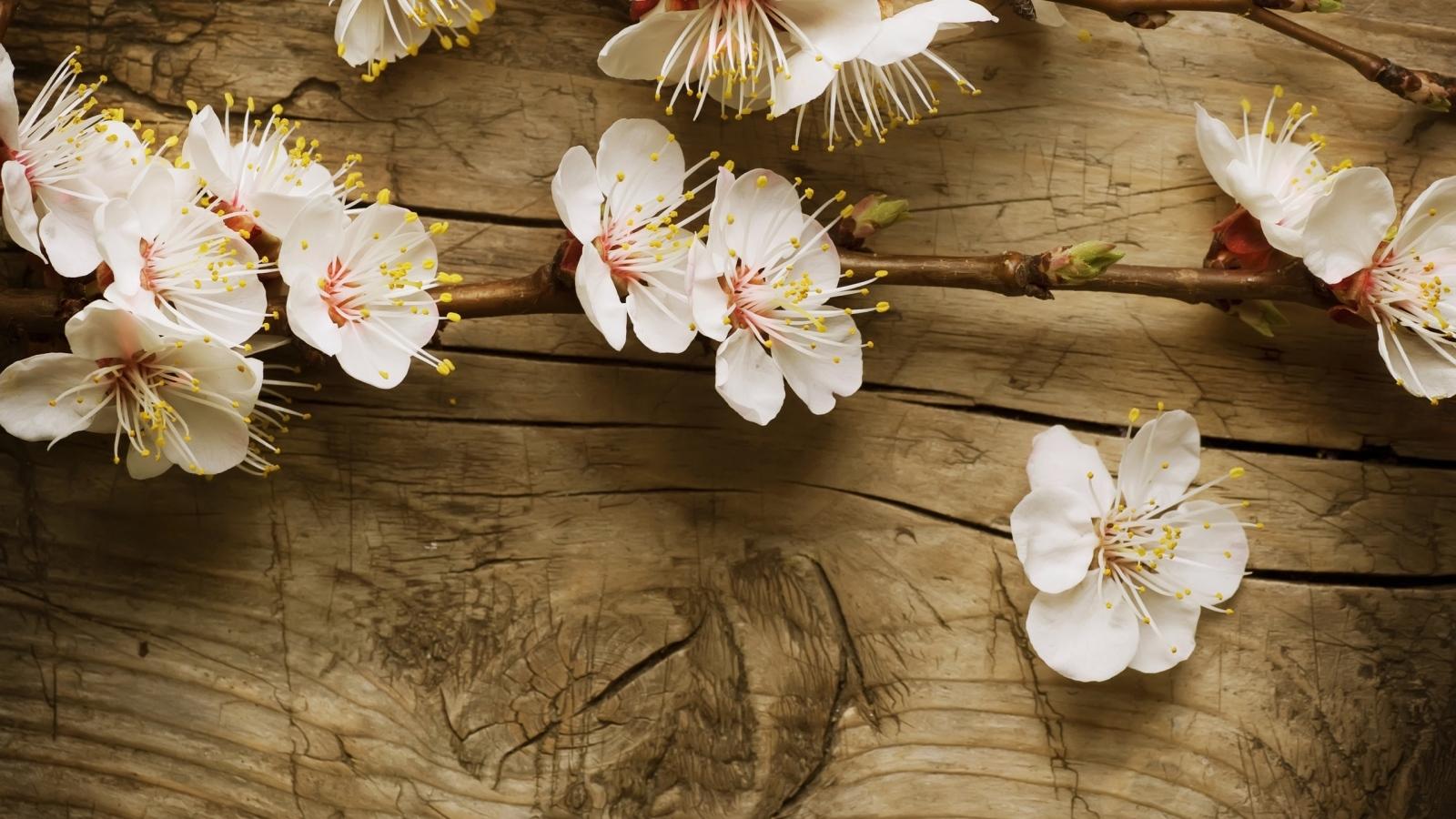 18321 скачать обои Растения, Цветы, Фон, Вишня - заставки и картинки бесплатно