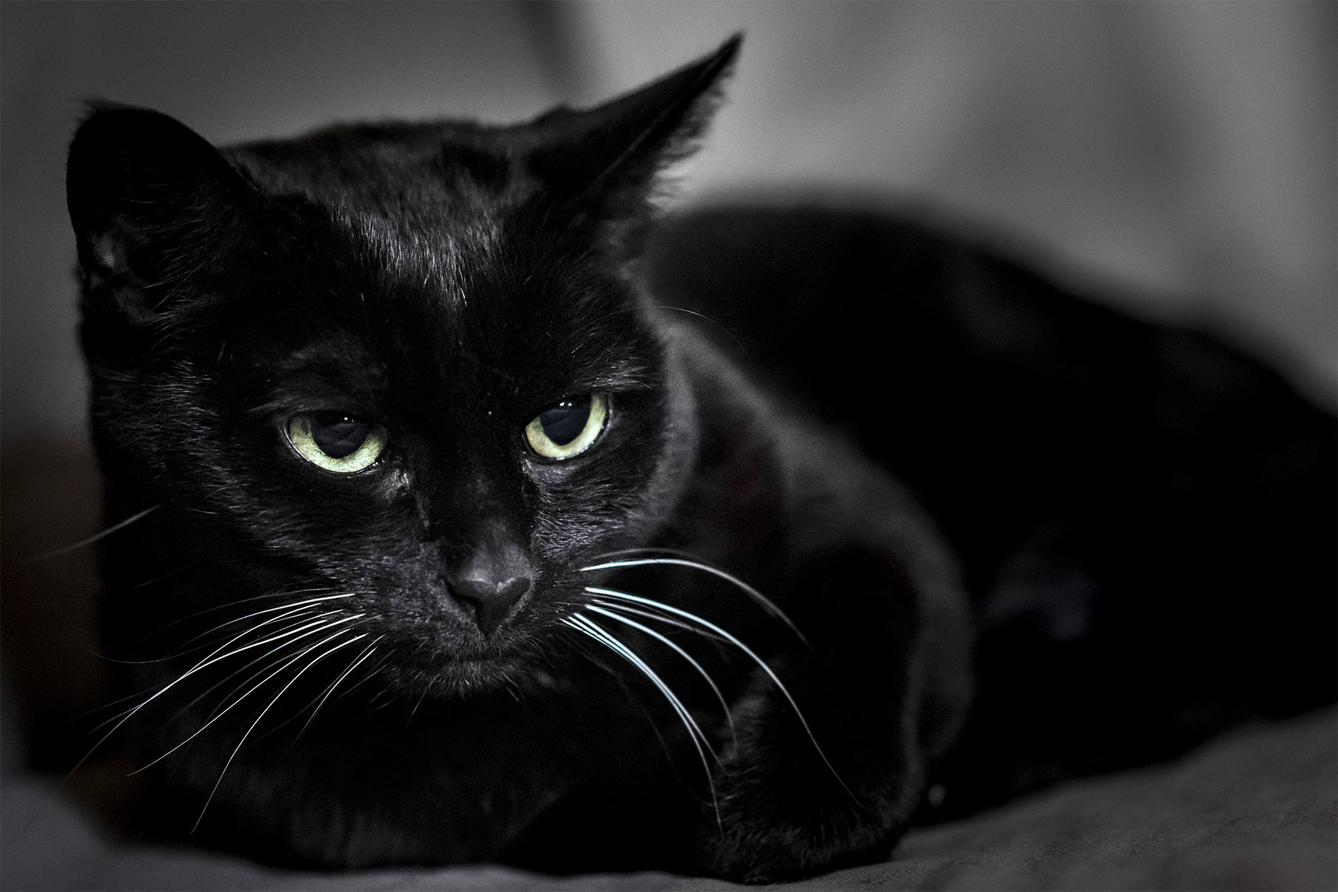 103503 download wallpaper Animals, Black Cat, Muzzle, Sight, Opinion screensavers and pictures for free