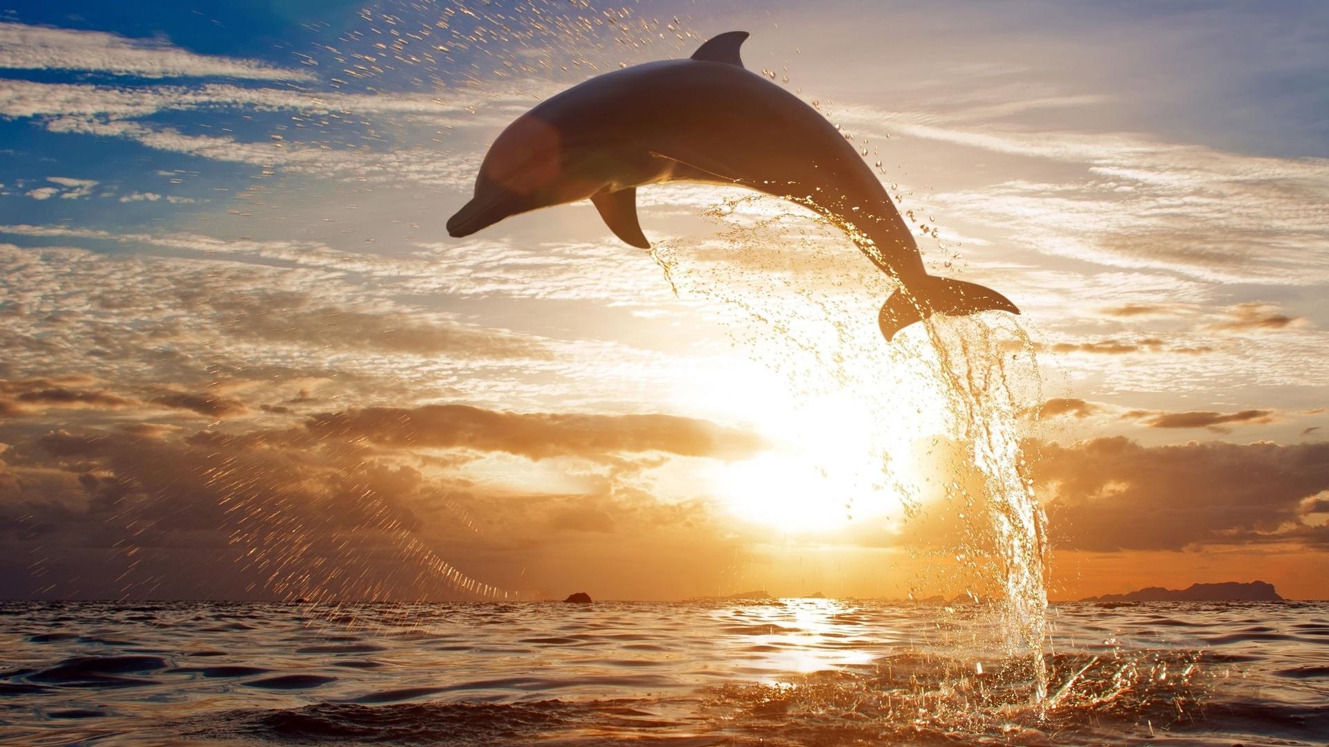 49356 Hintergrundbild herunterladen Delfine, Tiere, Landschaft, Sunset, Sea - Bildschirmschoner und Bilder kostenlos
