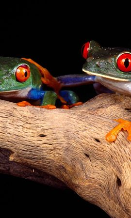 82650 baixar papel de parede Animais, Frogs, Casal, Par, Chique, Incomum, Madeira, Árvore, Escalar, Trepar - protetores de tela e imagens gratuitamente