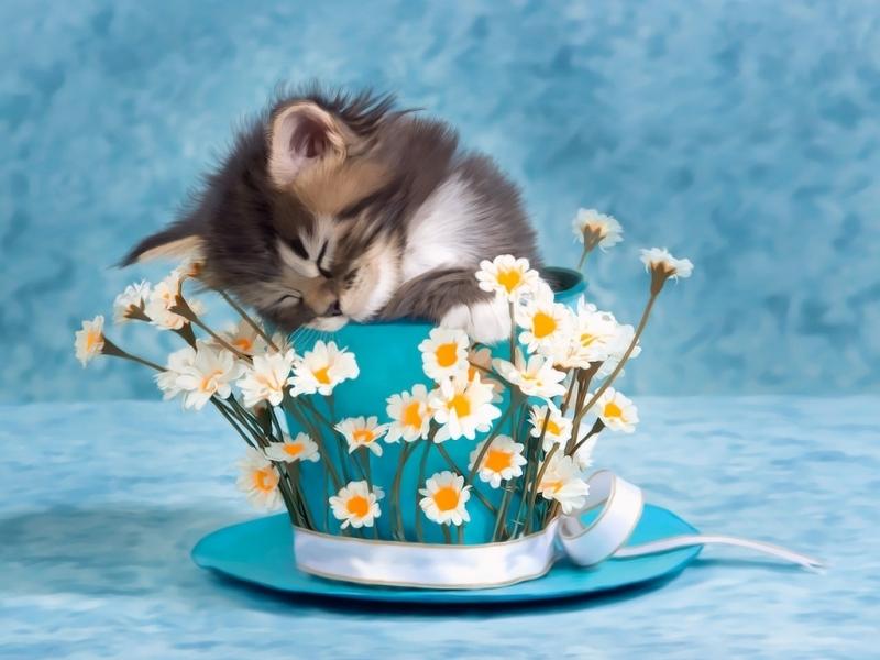 45099 скачать обои Животные, Кошки (Коты, Котики), Цветы - заставки и картинки бесплатно