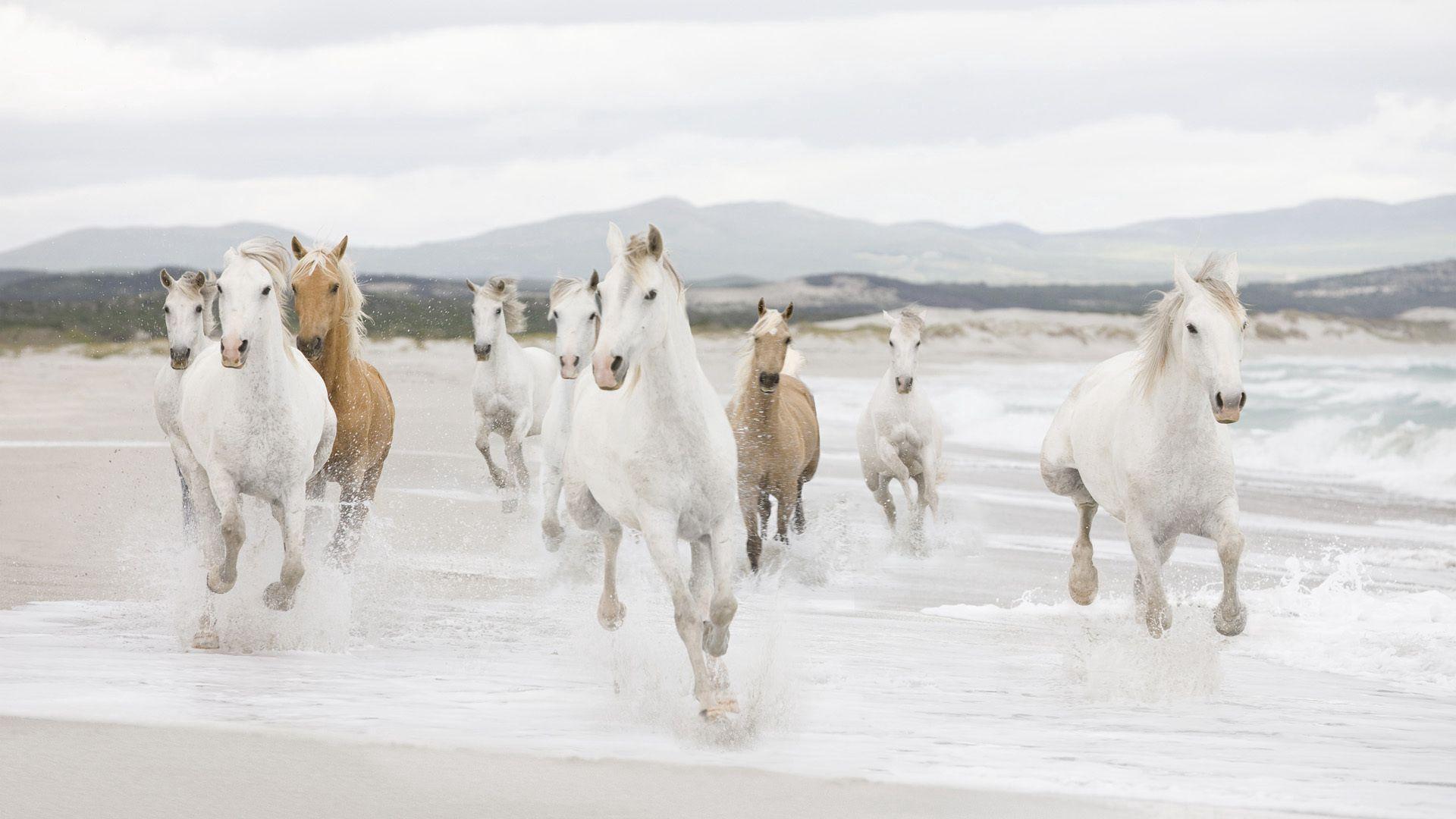 53076 download wallpaper Horses, Animals, Water, Shore, Bank, Herd, Run Away, Run screensavers and pictures for free