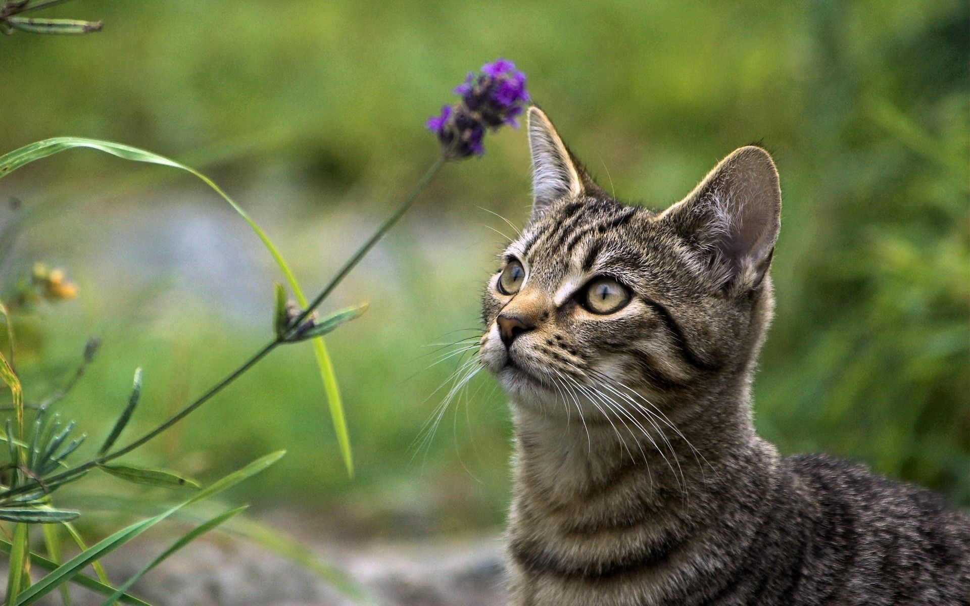 53963 download wallpaper Animals, Cat, Grass, Muzzle, Sight, Opinion screensavers and pictures for free
