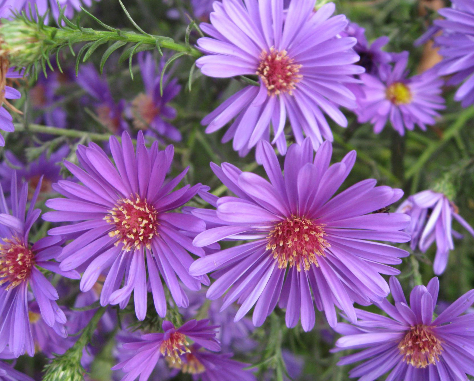 21946 скачать обои Растения, Цветы - заставки и картинки бесплатно