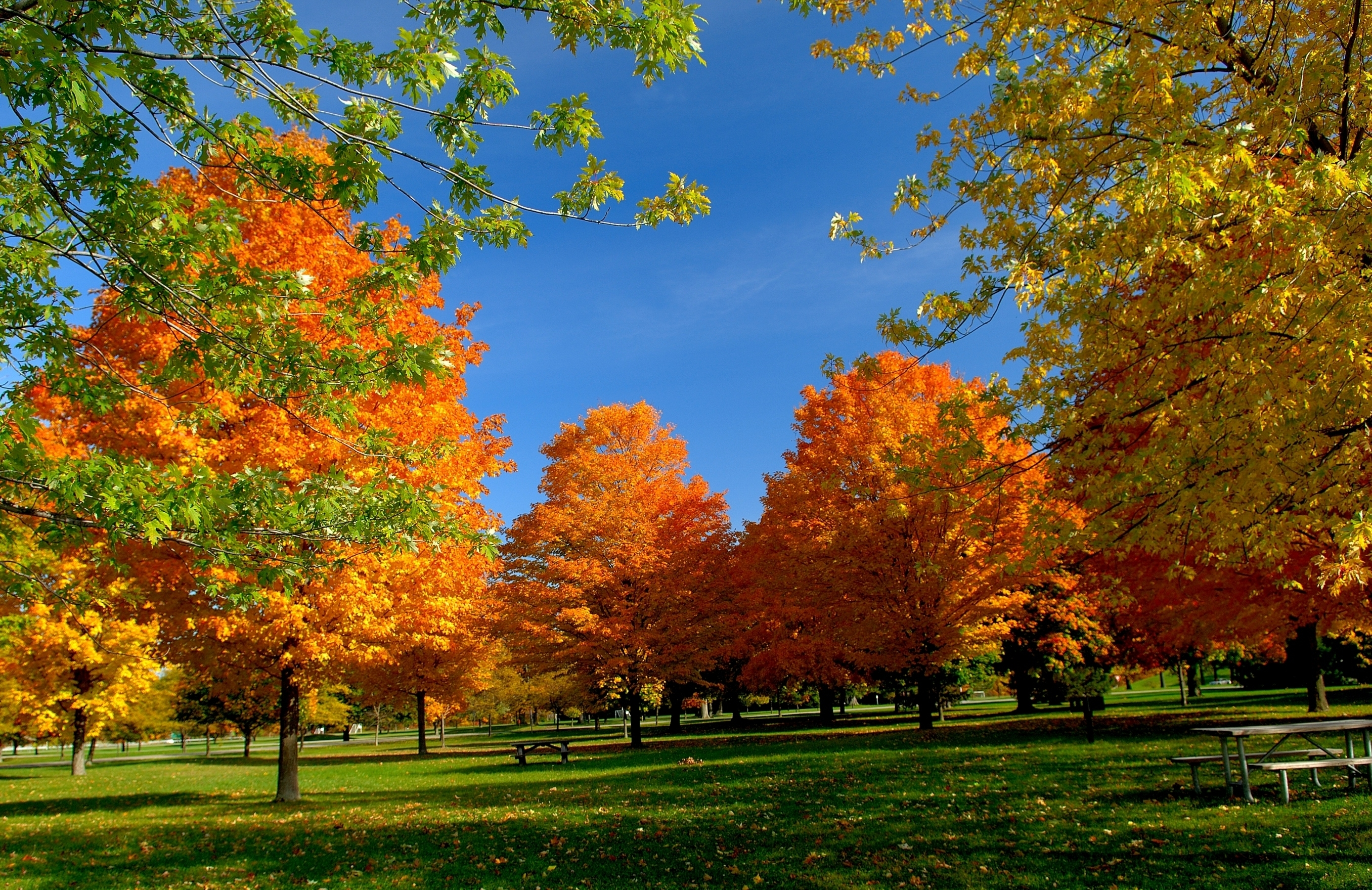 70277 Screensavers and Wallpapers Bench for phone. Download Nature, Trees, Autumn, Leaves, Park, Bench, Picnic pictures for free