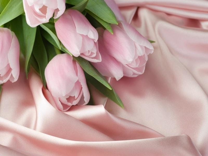 45362 скачать обои Тюльпаны, Цветы, Растения - заставки и картинки бесплатно