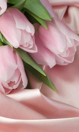 45362 скачать обои Растения, Цветы, Тюльпаны - заставки и картинки бесплатно