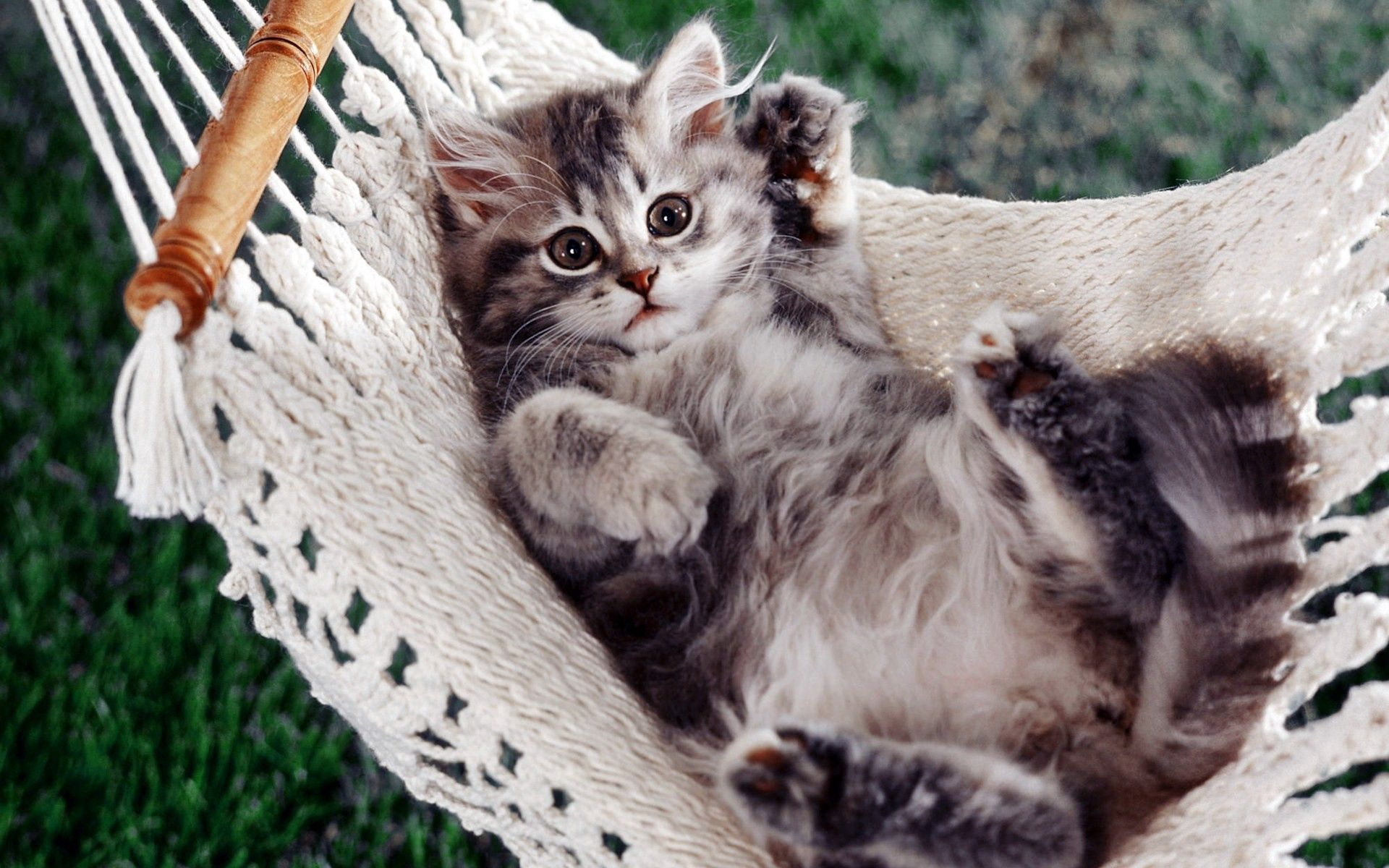 125221 download wallpaper Animals, Kitty, Kitten, Hammock, To Lie Down, Lie, Paw, Fluffy screensavers and pictures for free