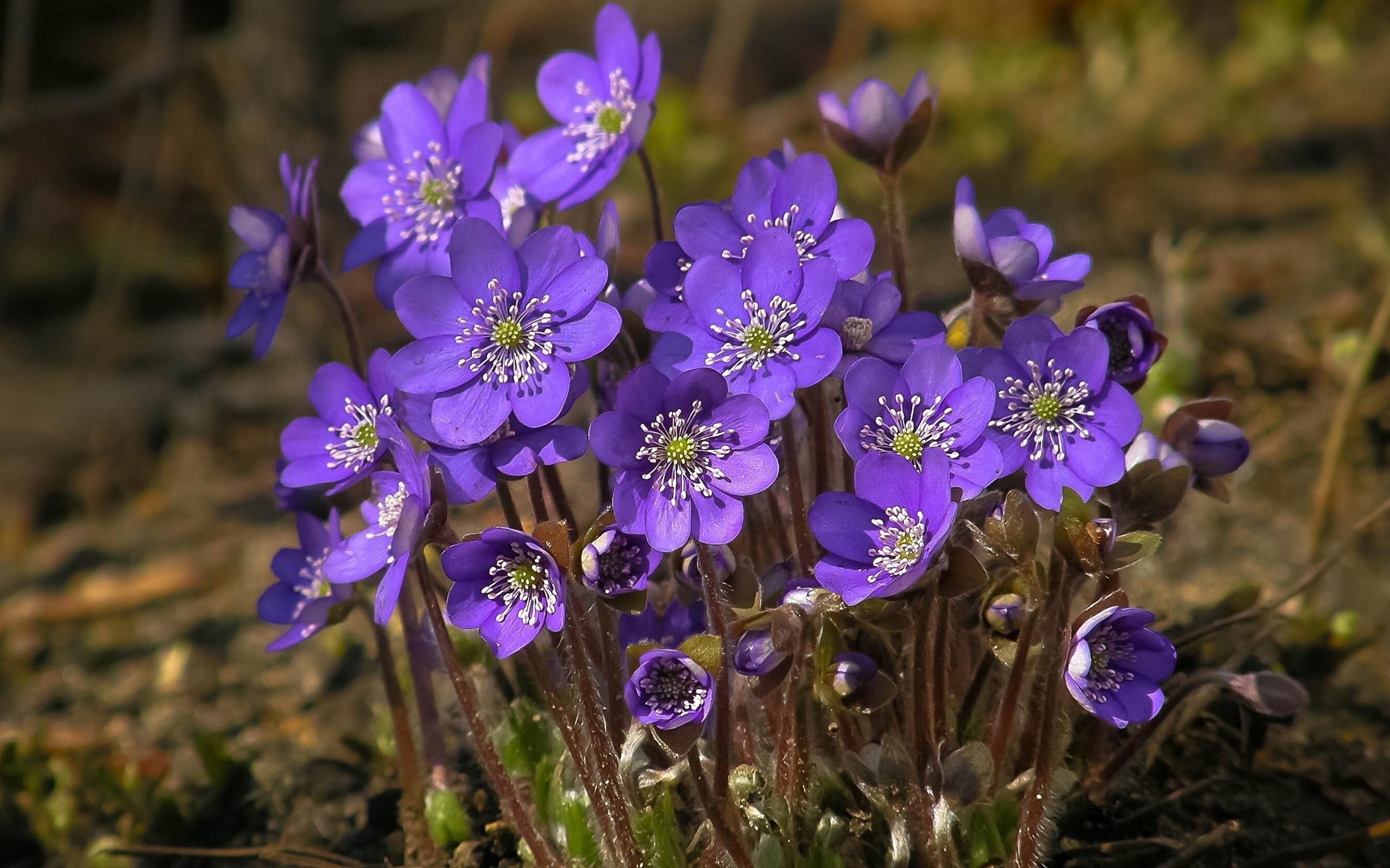 49515 скачать обои Растения, Цветы - заставки и картинки бесплатно