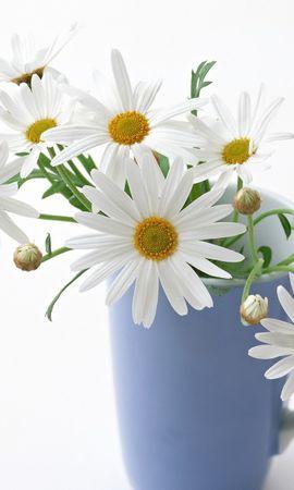 19063 télécharger le fond d'écran Plantes, Fleurs, Coupes, Camomille, Bouquets - économiseurs d'écran et images gratuitement