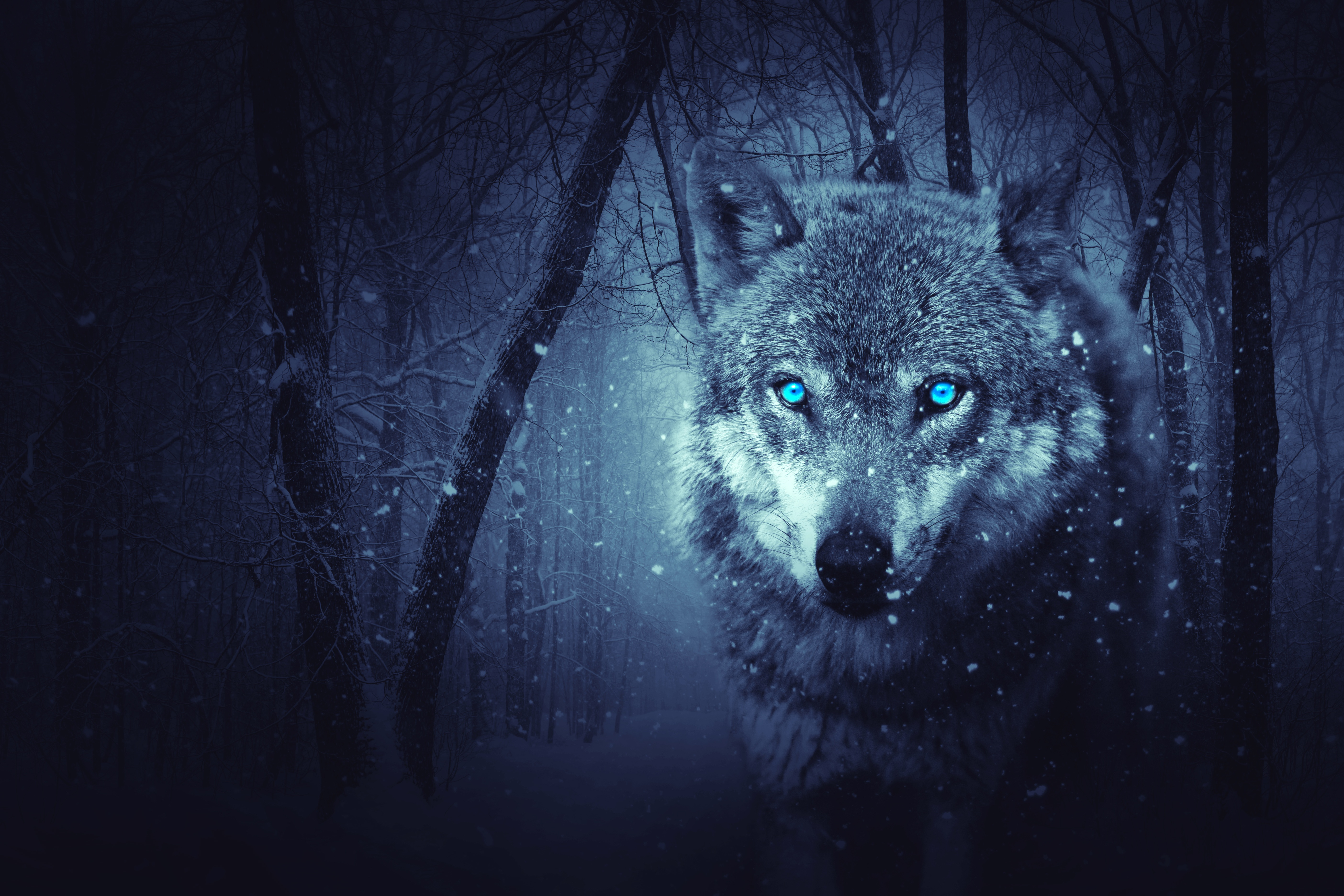 156736 download wallpaper Animals, Wolf, Predator, Photoshop, Art screensavers and pictures for free