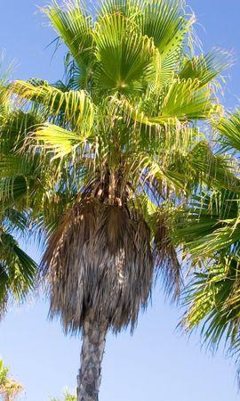 3366 descargar fondo de pantalla Plantas, Árboles, Palms: protectores de pantalla e imágenes gratis