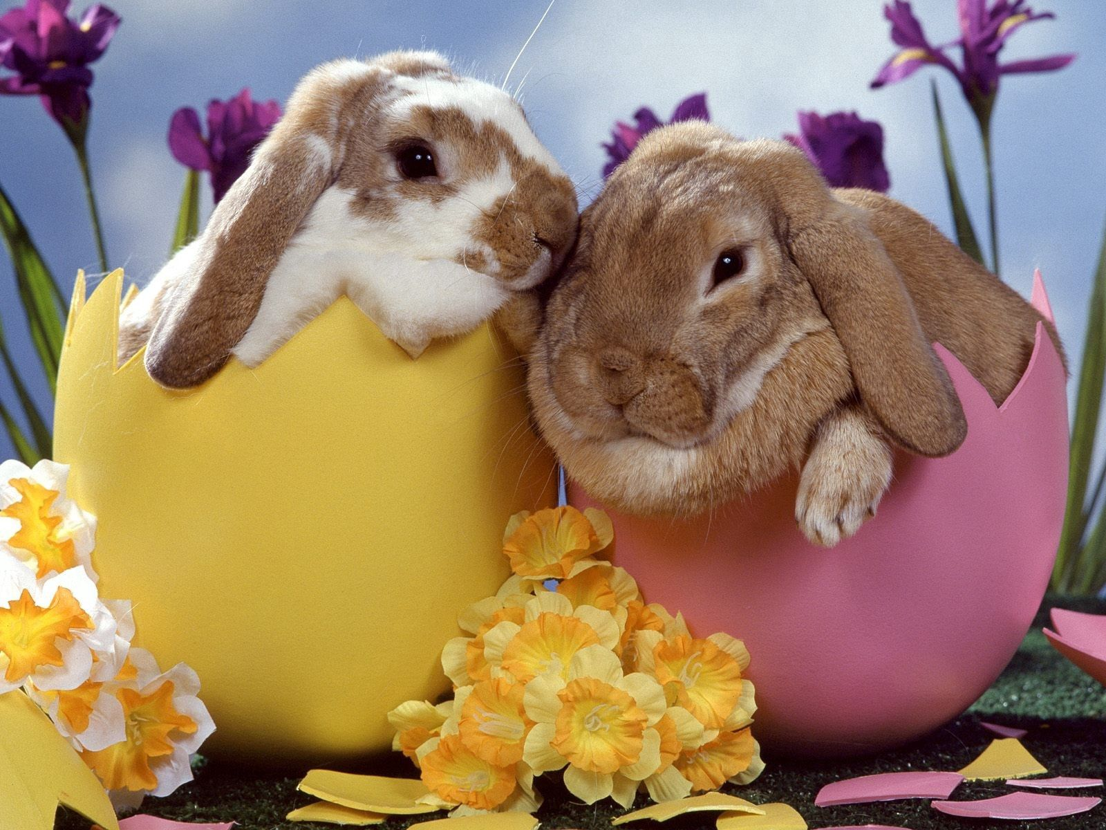 91275 download wallpaper Animals, Flowers, Rabbits, Couple, Pair, Sleep, Dream screensavers and pictures for free