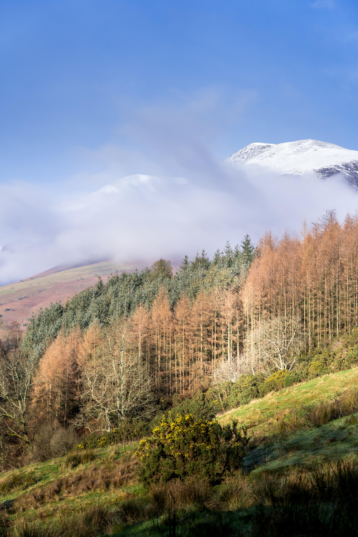 93965 免費下載壁紙 性质, 山, 戈拉, 树, 云, 云端, 顶点, 雪 屏保和圖片