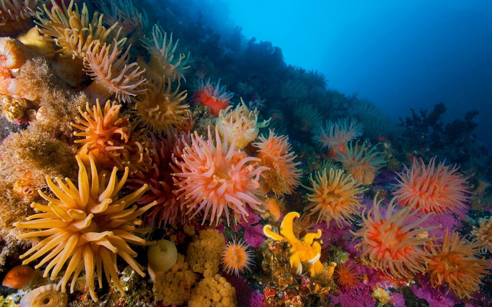 25698 скачать обои Животные, Пейзаж, Море, Кораллы - заставки и картинки бесплатно