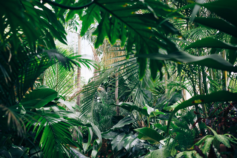 92260 papel de parede 1080x2400 em seu telefone gratuitamente, baixe imagens Plantas, Flores, Estufa, Jardim Botânico 1080x2400 em seu celular