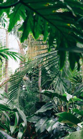 92260 скачать обои Цветы, Растения, Ботанический Сад, Оранжерея, Зеленый - заставки и картинки бесплатно