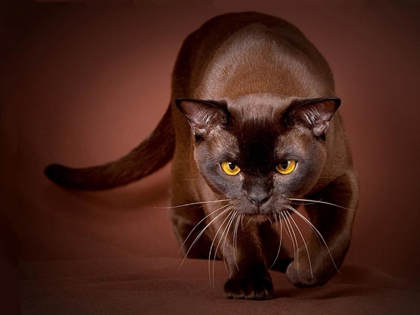 32699 скачать Красные обои на телефон бесплатно, Кошки (Коты, Котики), Животные Красные картинки и заставки на мобильный