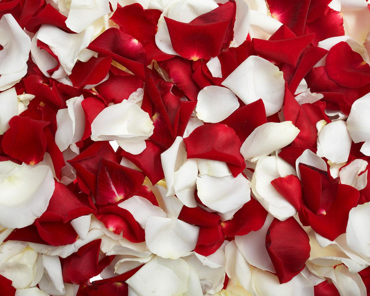 13305 скачать обои Растения, Фон, Розы - заставки и картинки бесплатно