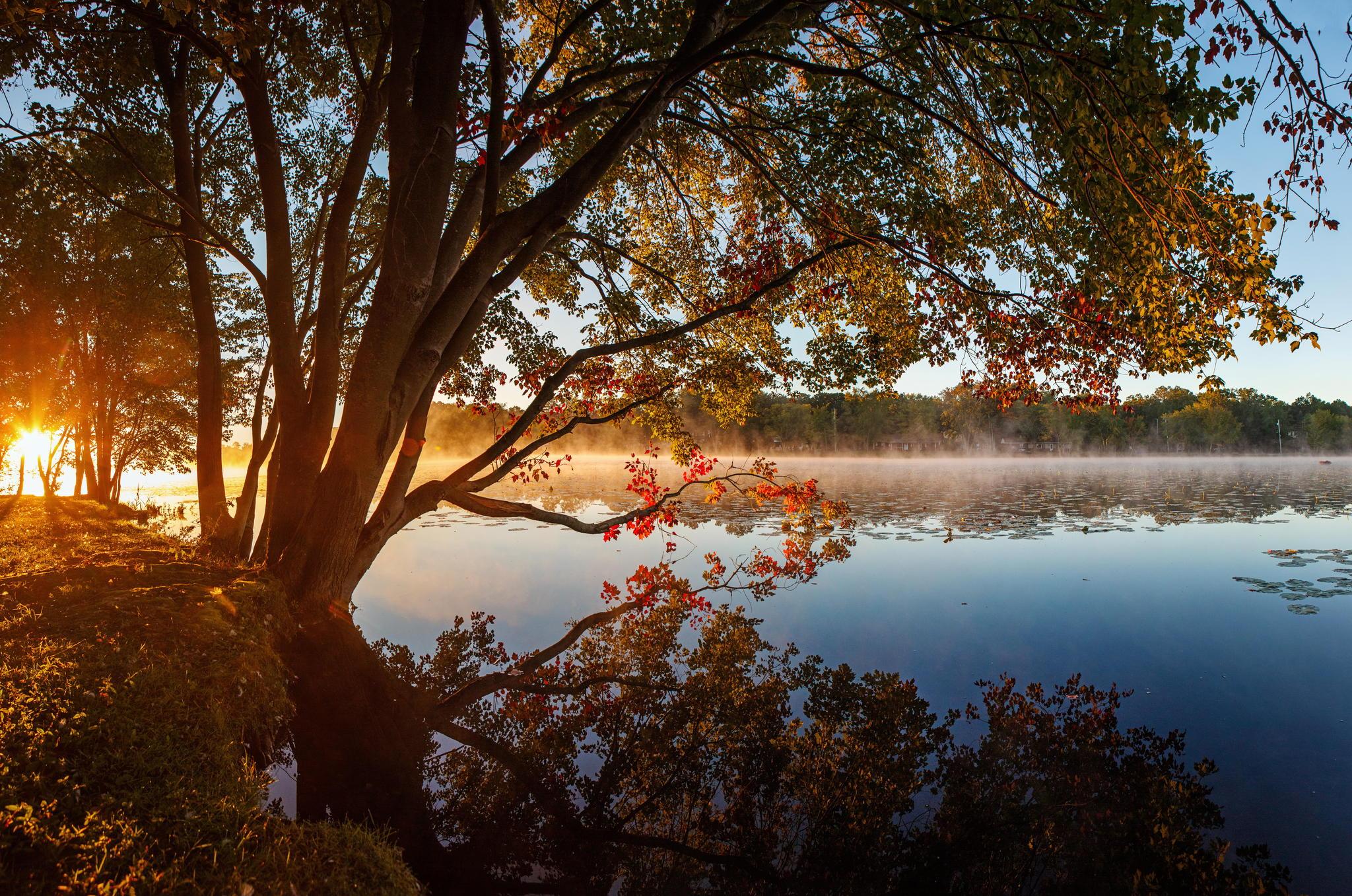 127350 papel de parede 720x1280 em seu telefone gratuitamente, baixe imagens Natureza, Grama, Lago, Reflexão, Madeira, Árvore 720x1280 em seu celular