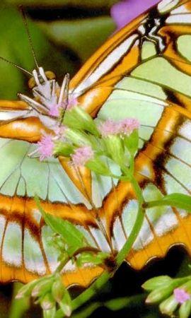 42136 Salvapantallas y fondos de pantalla Insectos en tu teléfono. Descarga imágenes de Mariposas, Insectos gratis