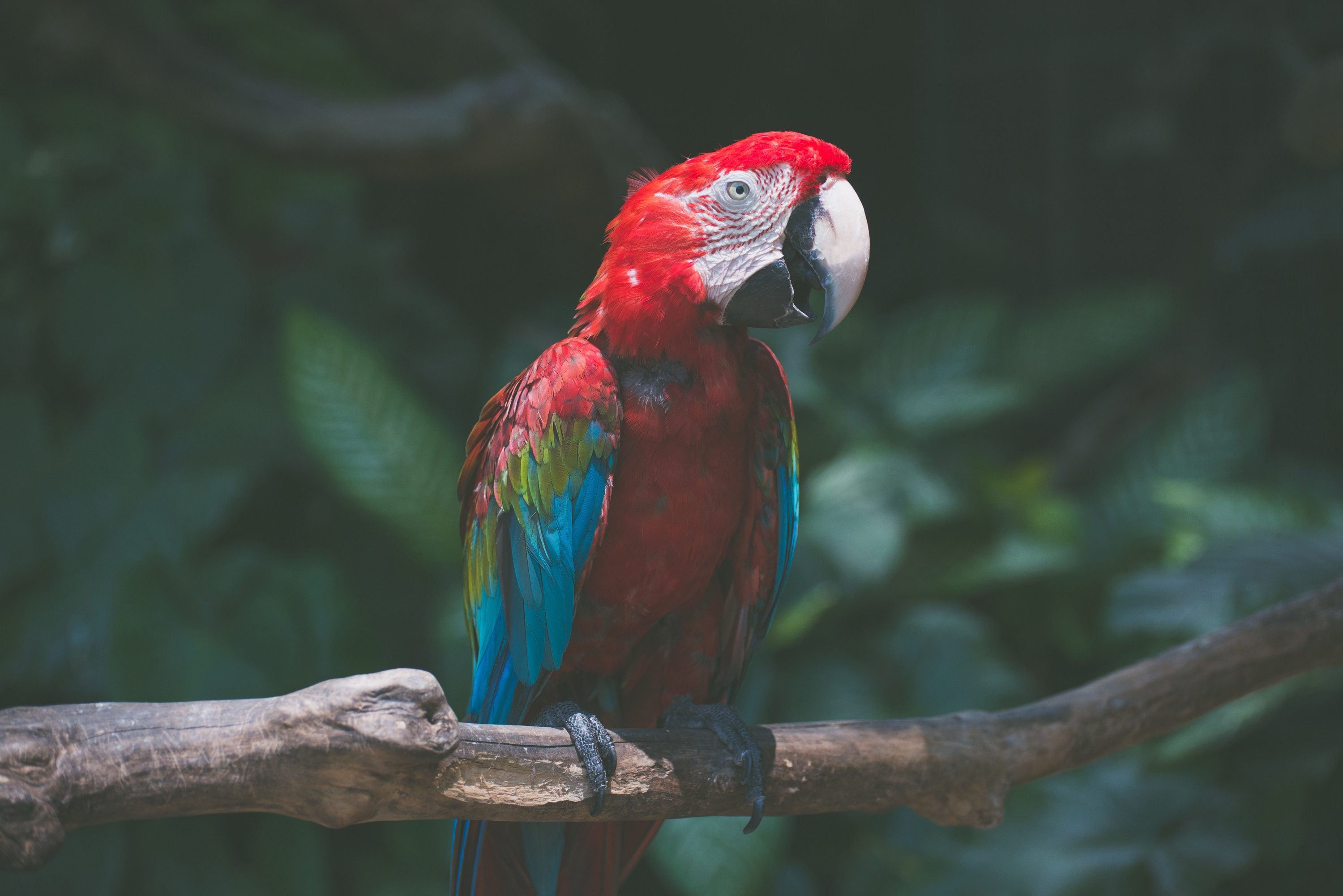 88503 download wallpaper Animals, Parrots, Macaw, Bird, Branch screensavers and pictures for free