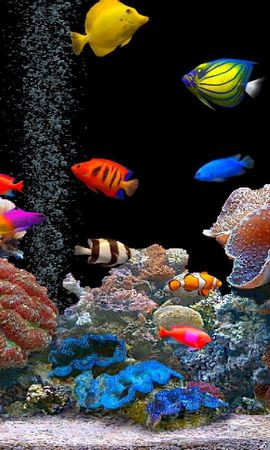 20597 download wallpaper Animals, Fishes screensavers and pictures for free