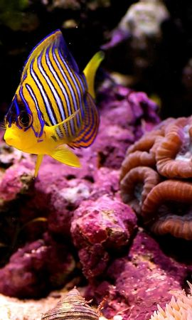 152933 download wallpaper Animals, Sea, Small Fish, Fishy, Macro, Bottom, Coral screensavers and pictures for free