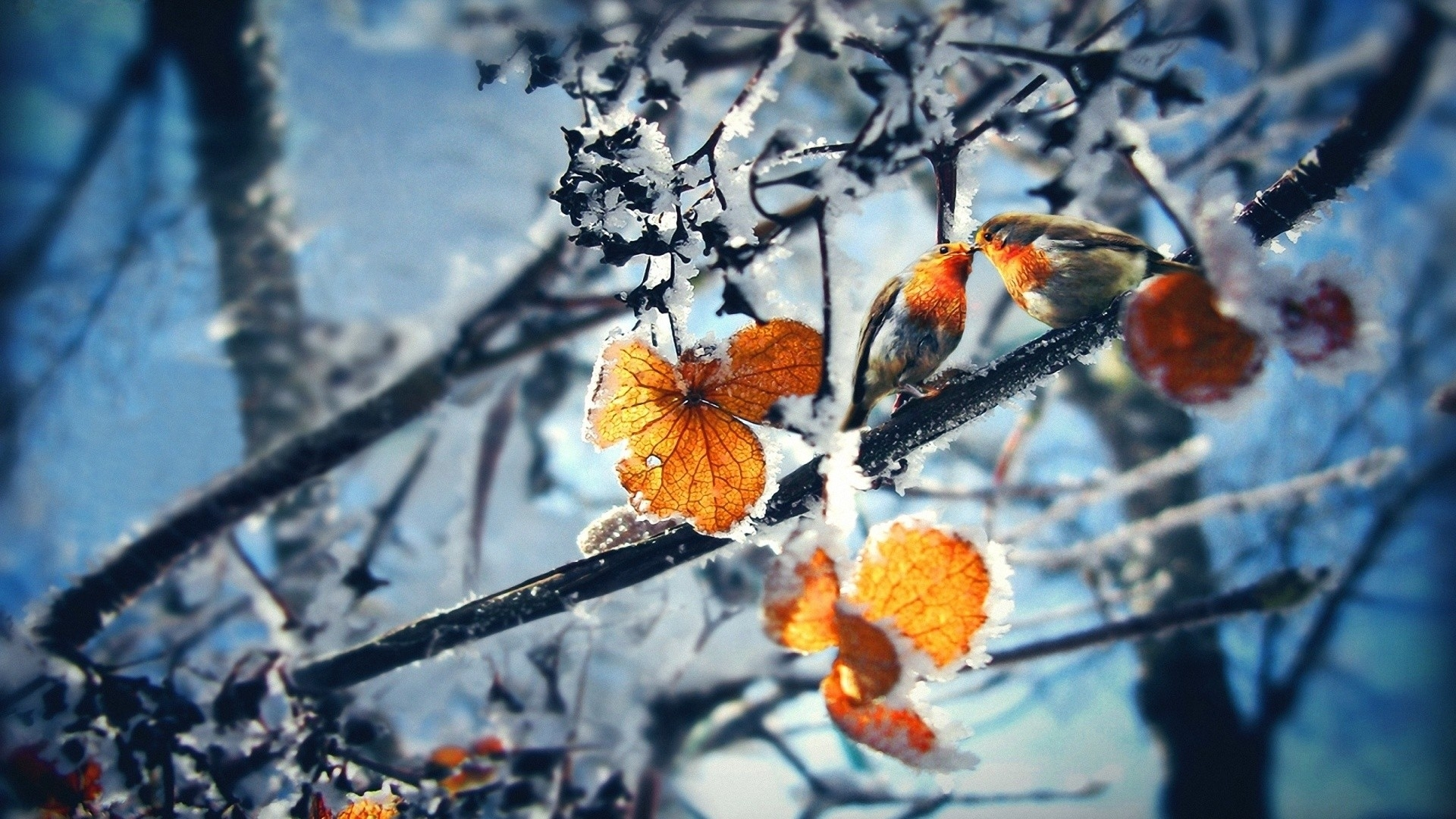 42084 download wallpaper Landscape, Winter, Leaves screensavers and pictures for free