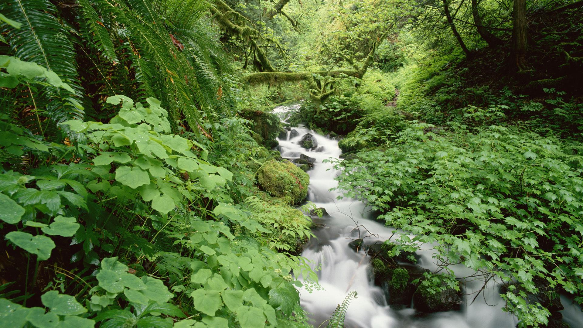 28146 скачать обои Пейзаж, Река, Деревья - заставки и картинки бесплатно