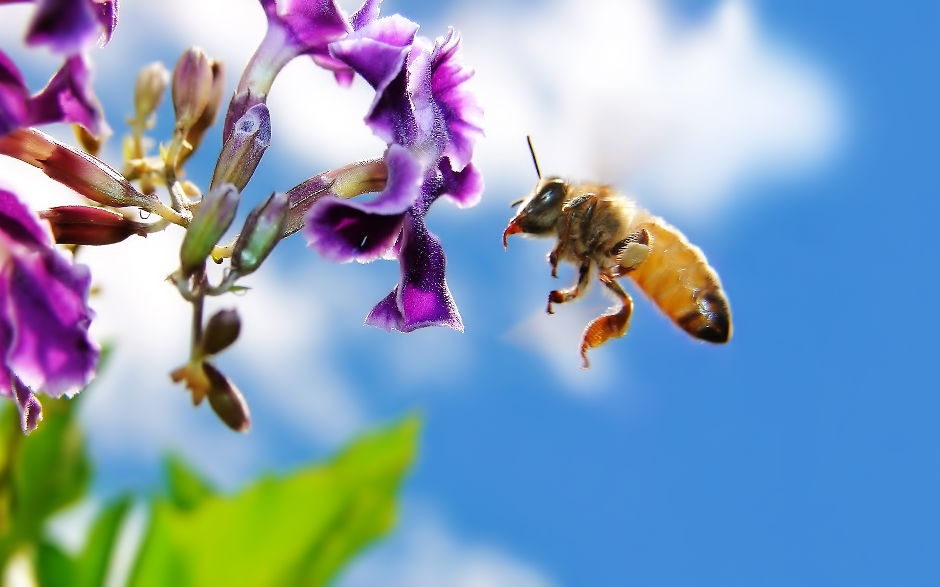 41282 Screensavers and Wallpapers Bees for phone. Download Insects, Bees pictures for free