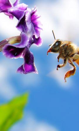 41282 télécharger le fond d'écran Insectes, Abeilles - économiseurs d'écran et images gratuitement