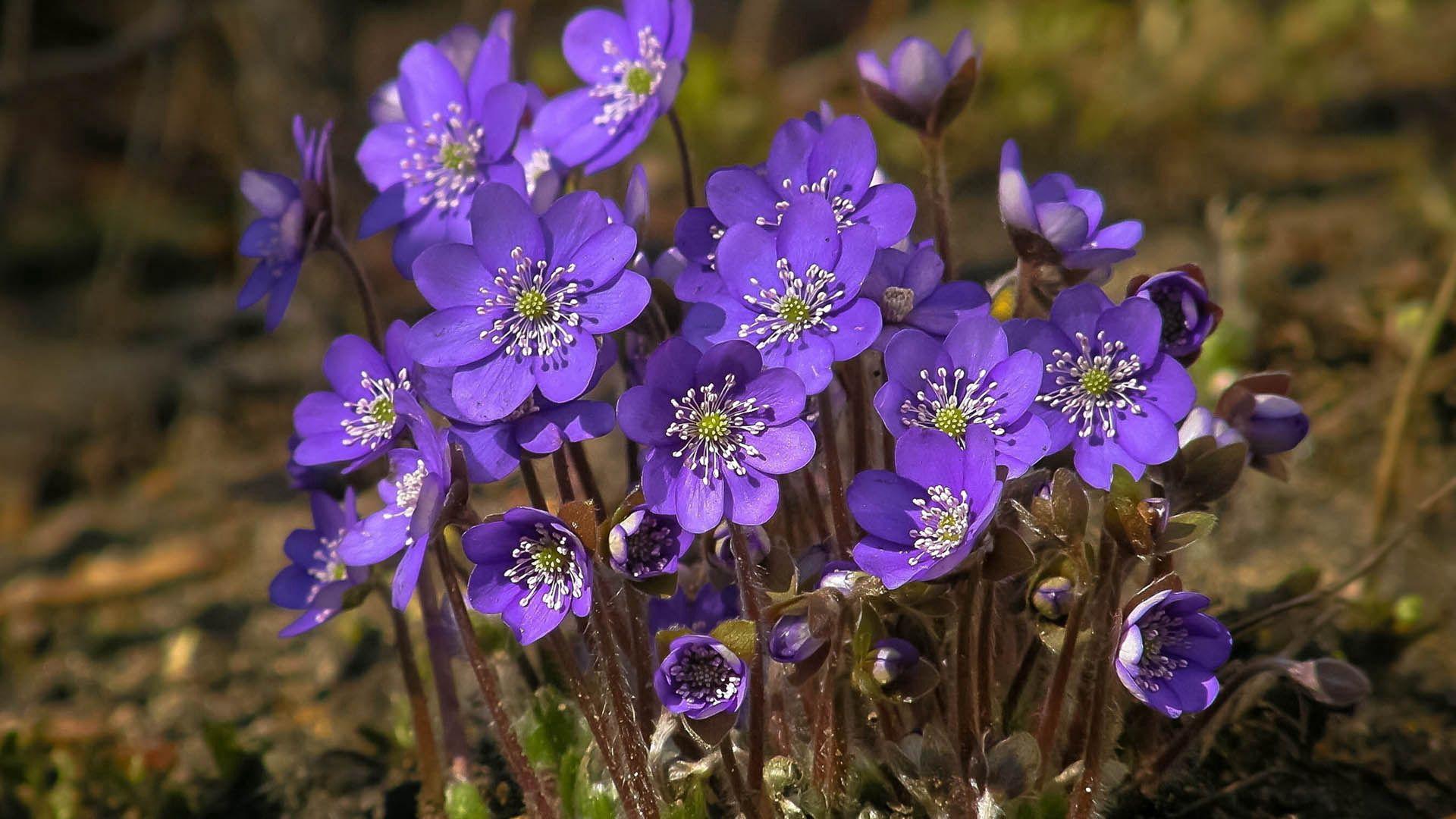62835 скачать обои Цветы, Цветение, Трава, Растение, Полевой - заставки и картинки бесплатно