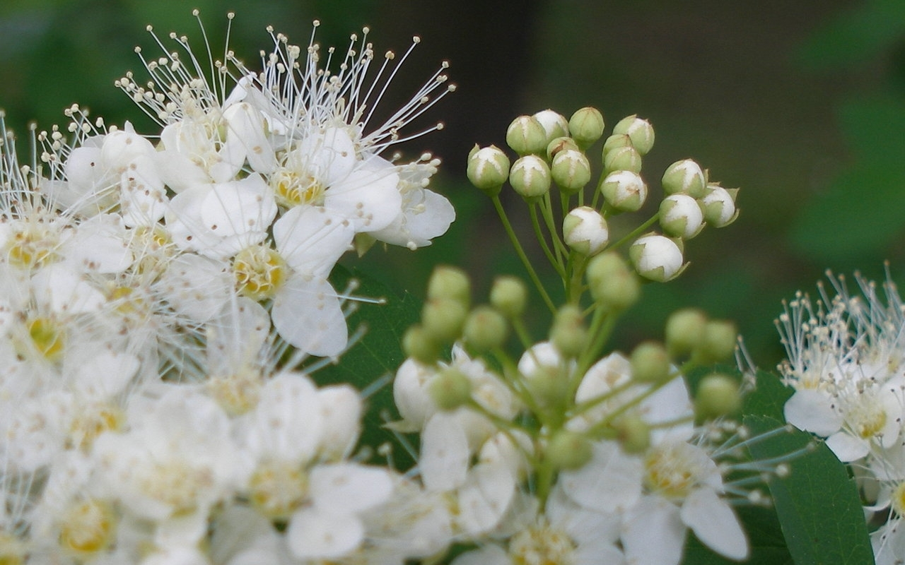 5182 скачать обои Растения, Цветы - заставки и картинки бесплатно