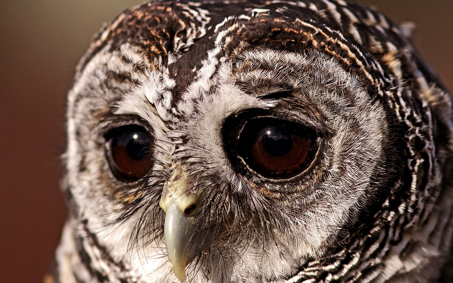 64982 Screensavers and Wallpapers Eyes for phone. Download Animals, Owl, Bird, Eyes, Tawny Owl, Sad Look pictures for free