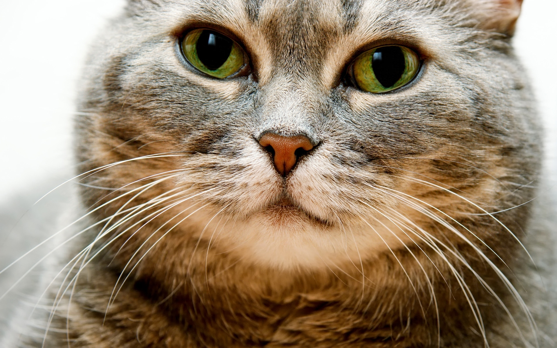 50107 download wallpaper Animals, Cats screensavers and pictures for free