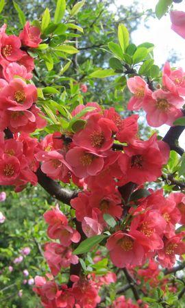 6341 скачать обои Растения, Цветы - заставки и картинки бесплатно