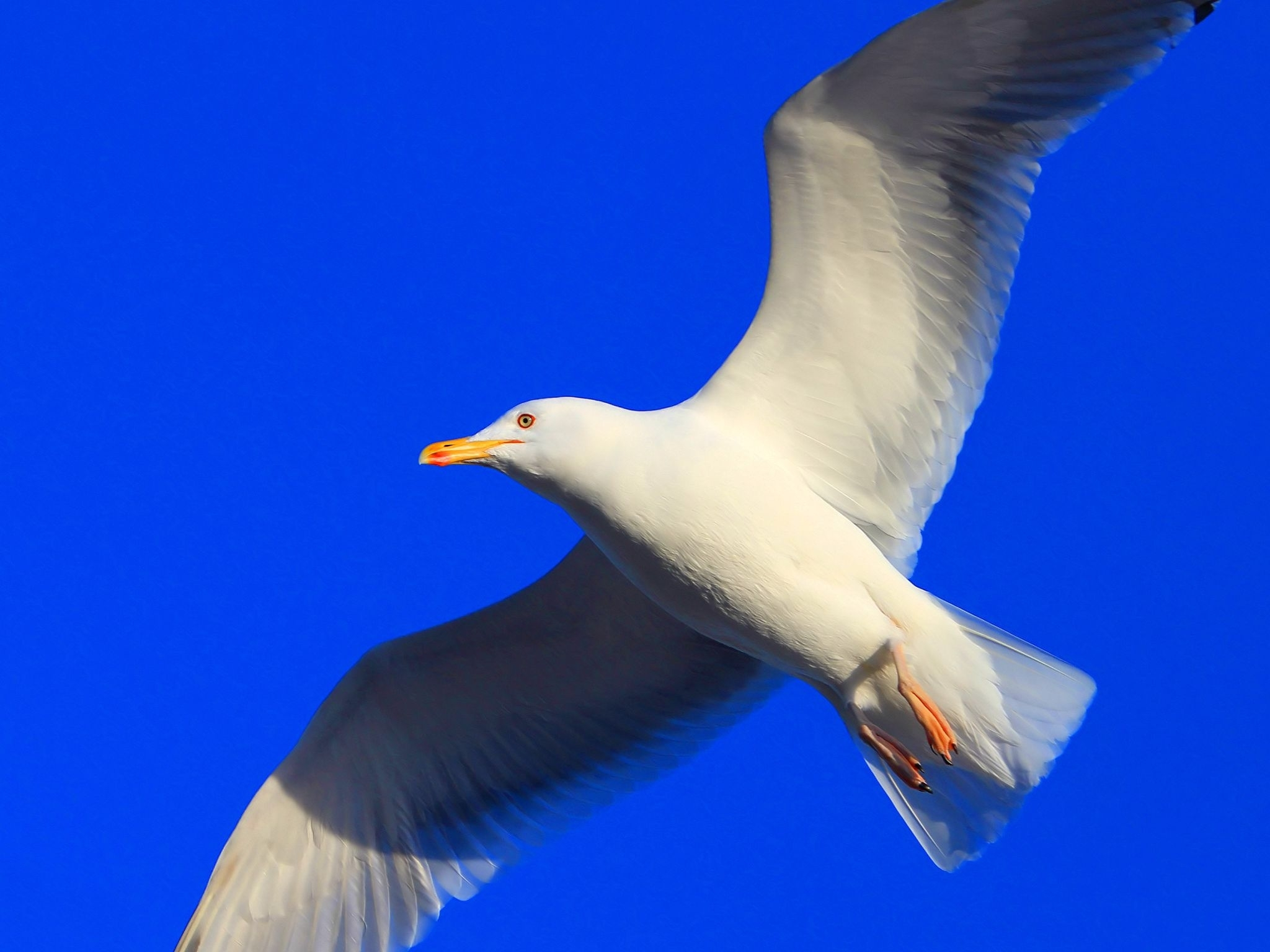 62536 download wallpaper Animals, Gull, Seagull, Bird, Flight, Sweep, Wave screensavers and pictures for free