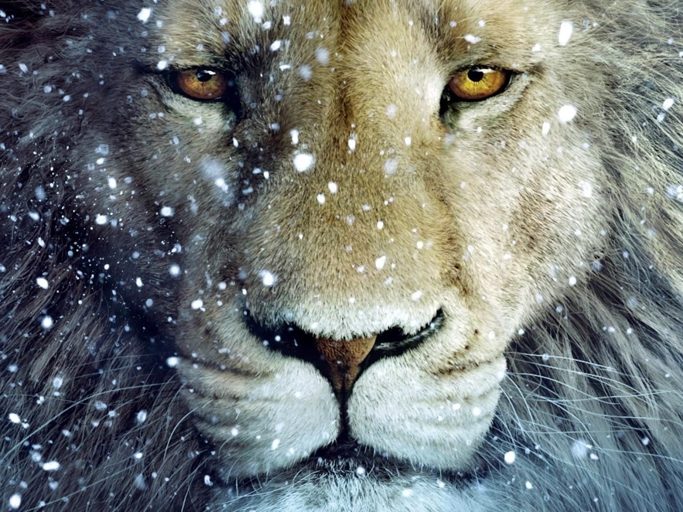45382 скачать обои Животные, Львы - заставки и картинки бесплатно