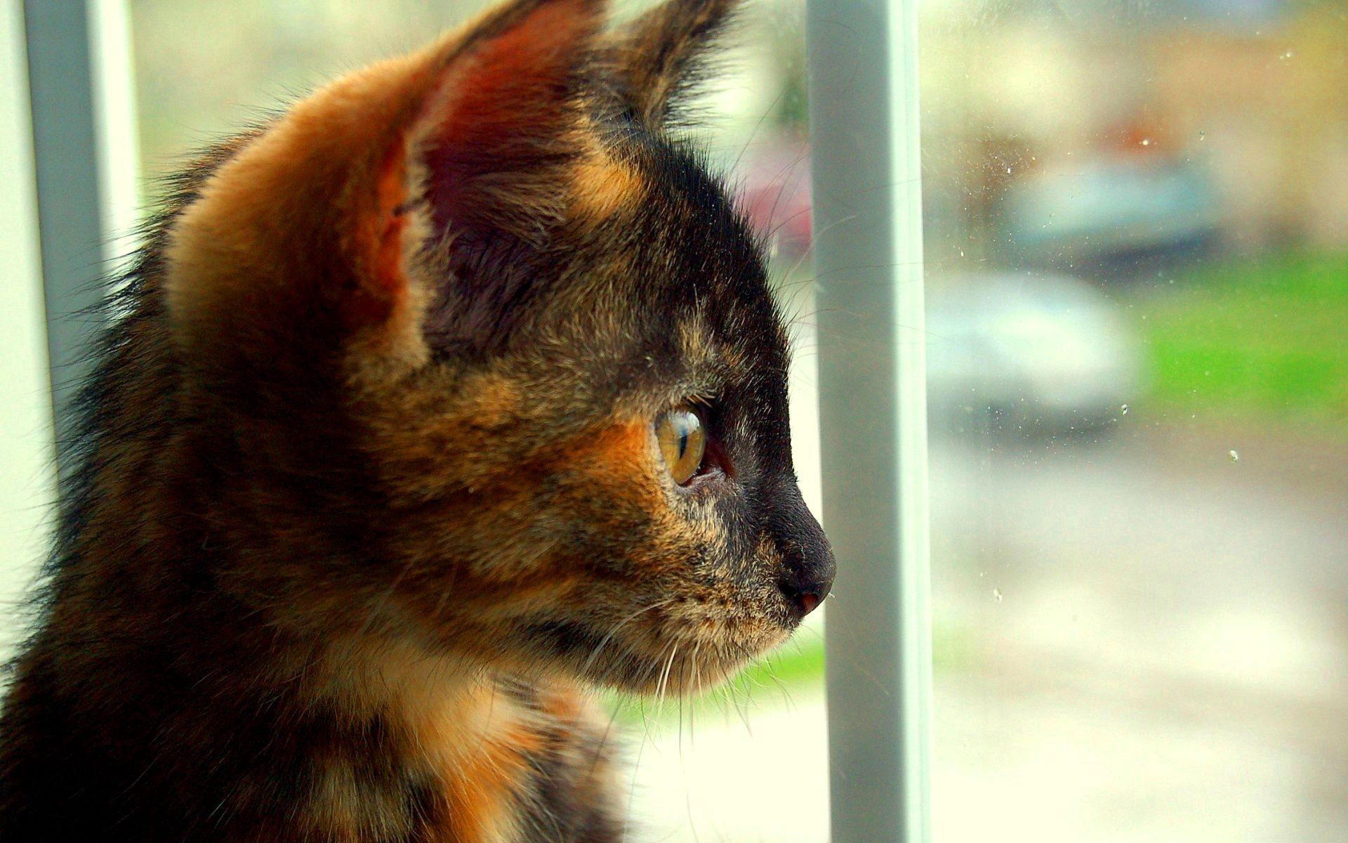 87658 download wallpaper Animals, Kitty, Kitten, Spotted, Spotty, Sight, Opinion, Profile screensavers and pictures for free