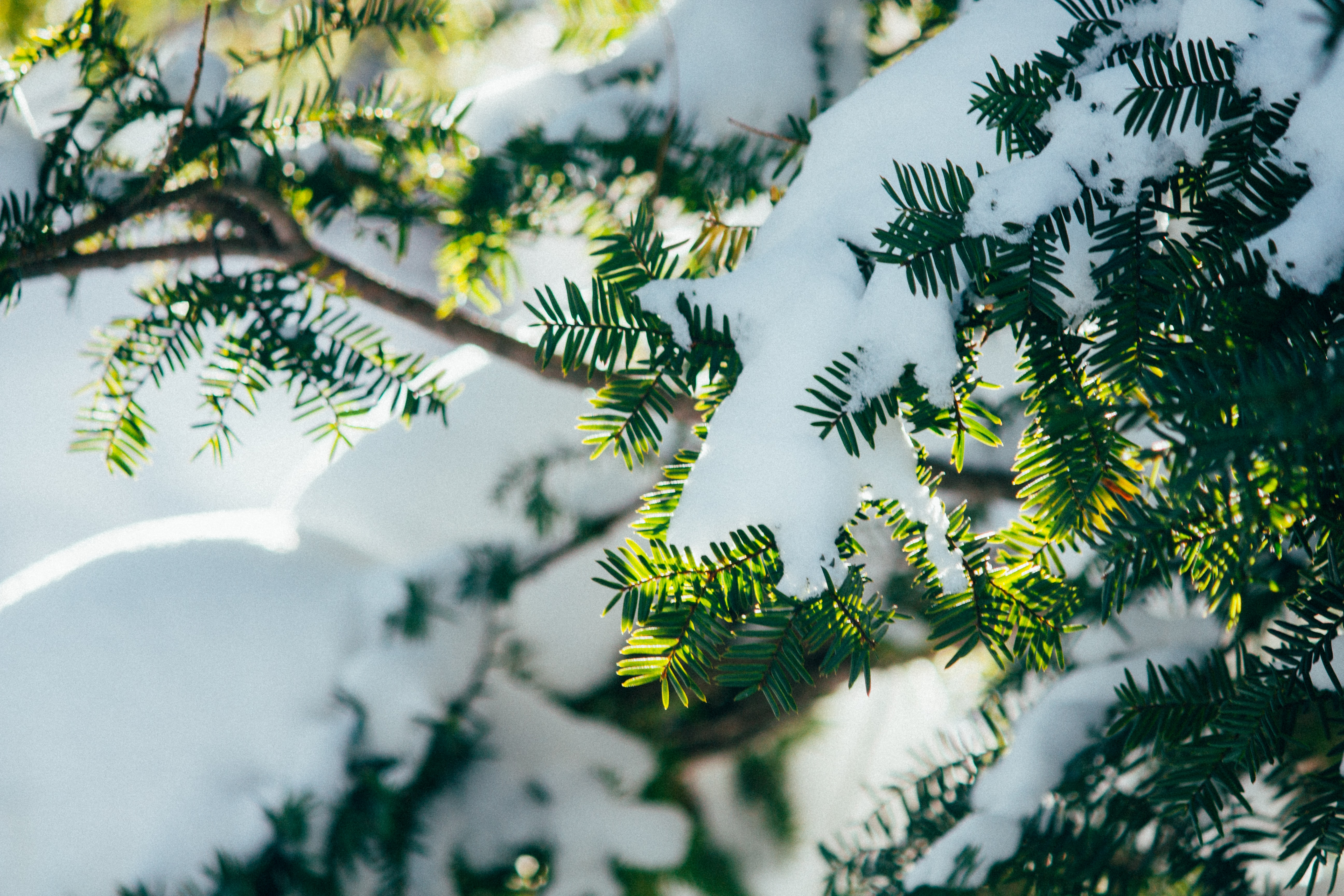 122747 download wallpaper Macro, Branches, Snow, Plant, Winter screensavers and pictures for free