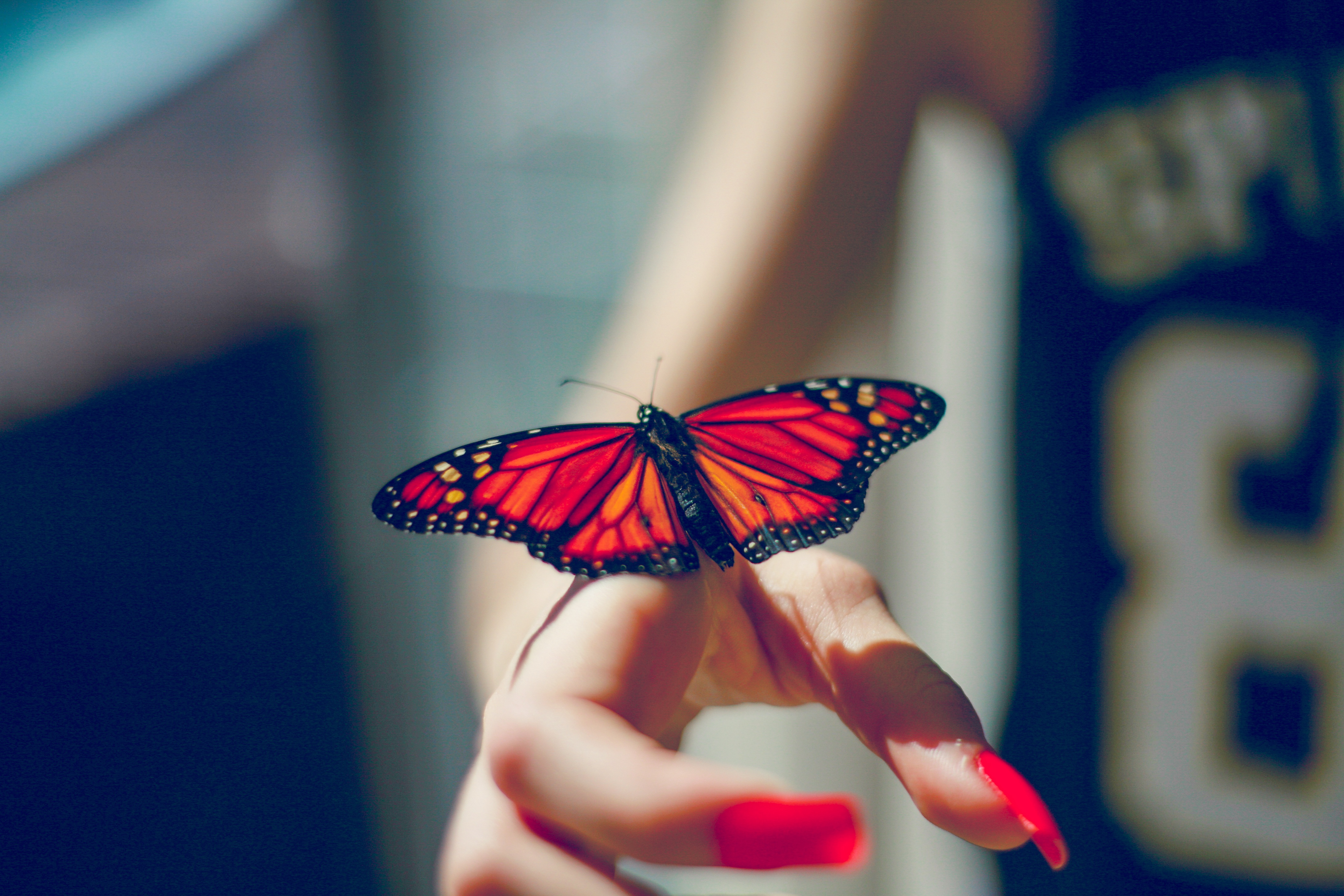 55134 Screensavers and Wallpapers Hand for phone. Download Animals, Butterfly, Insect, Hand pictures for free