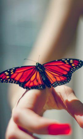 お使いの携帯電話の55134スクリーンセーバーと壁紙昆虫。 動物, バタフライ, 蝶, 昆虫, 手の写真を無料でダウンロード