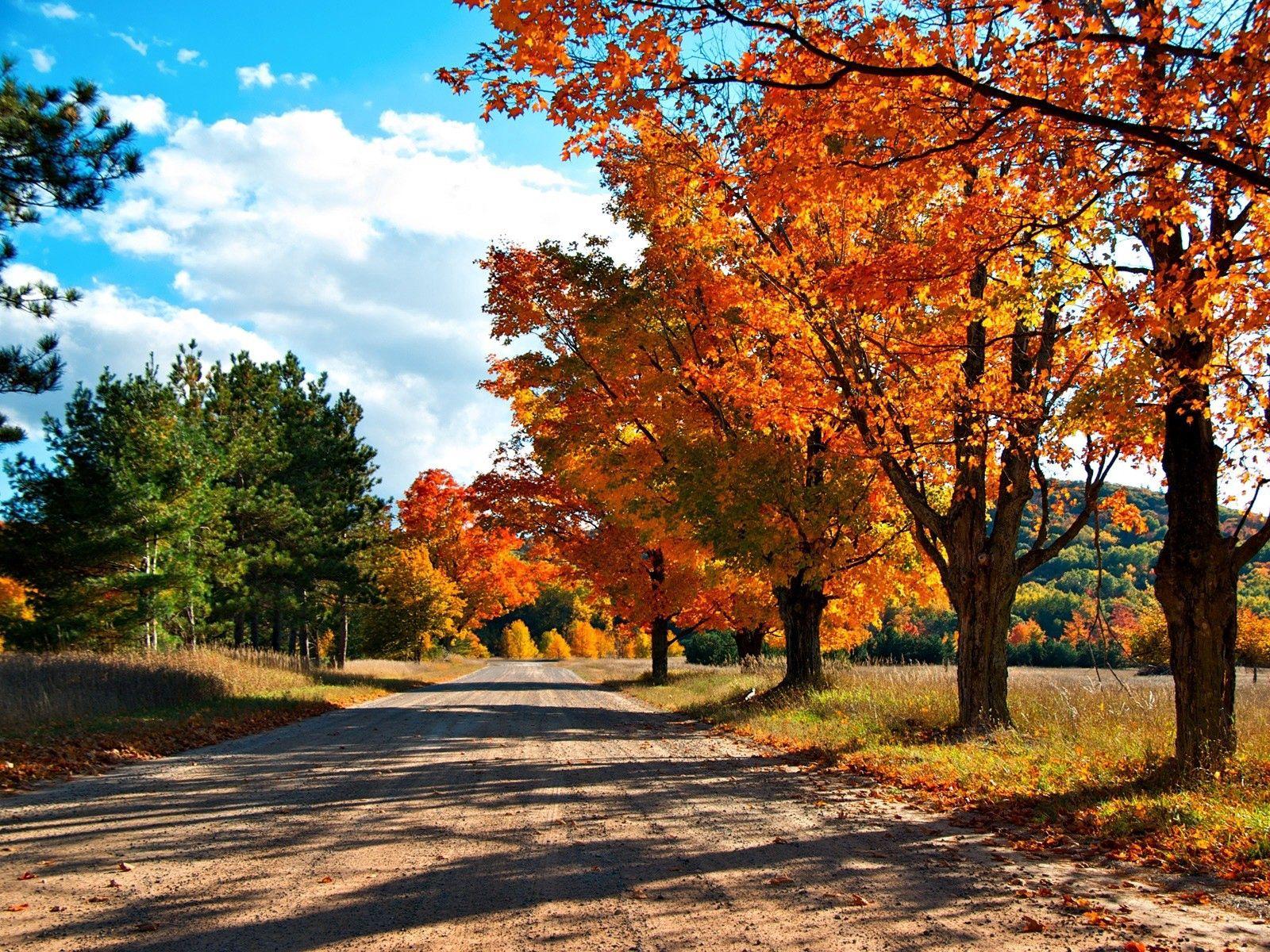 135326 скачать Желтые обои на телефон бесплатно, Осень, Природа, Деревья, Листья, Дорога, Тени Желтые картинки и заставки на мобильный