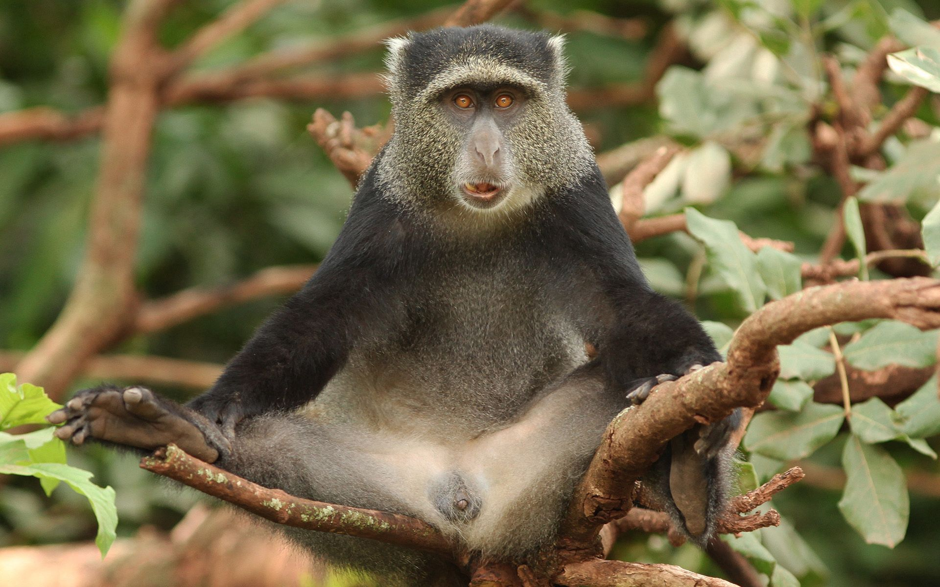 100073 download wallpaper Animals, Africa, Monkey, Wood, Tree, Sit, Funny screensavers and pictures for free